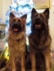 Bailey & Michka - Christmas 2012
