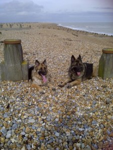 the hairy hoolies on Winchelsea Beach April 2013