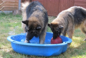 The Hairy Hoolies enjoying water fun in the garden